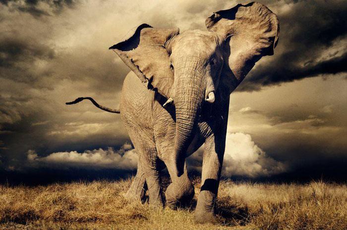elefante seo
